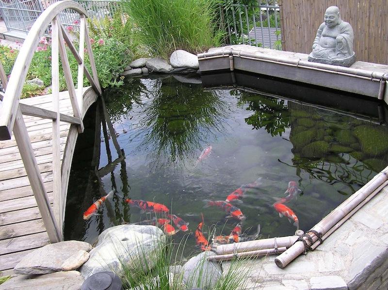 Koi garden laghetto dolce vita travel magazine for Laghetti e carpe koi