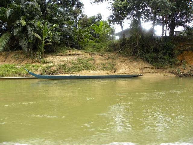 Lungo le rive del lago Batang Ai