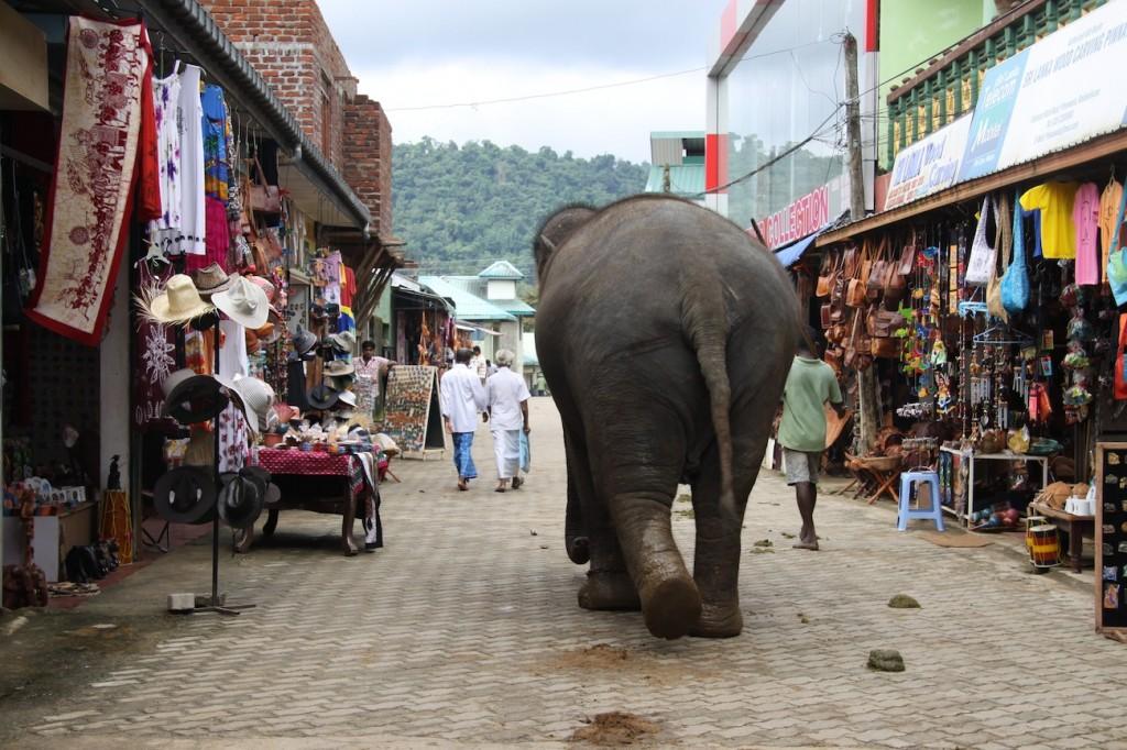 Elefanti a spasso tra i negozietti -IMG_0651