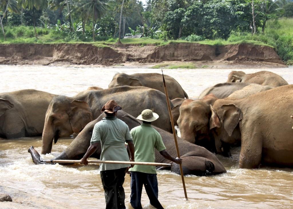 Elefanti al bagno - IMG_0706