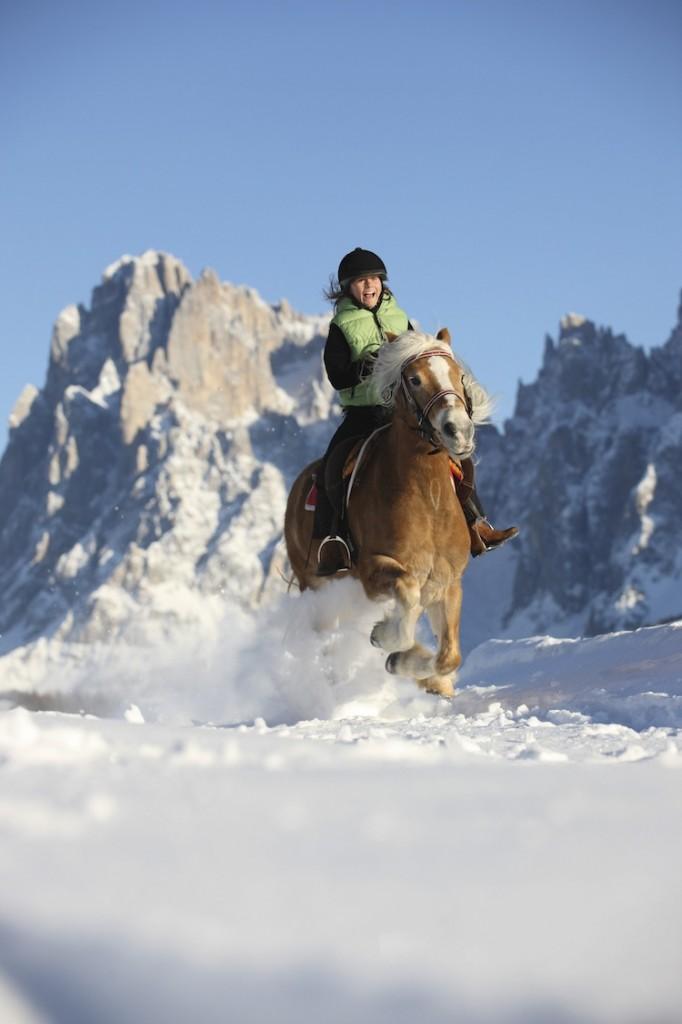 A cavallo di un avelignese sulla neve delle Dolomiti