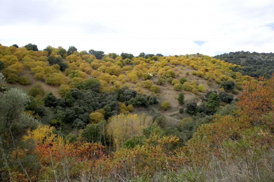 I bellissimi colori della Valle del Genal a Novembre