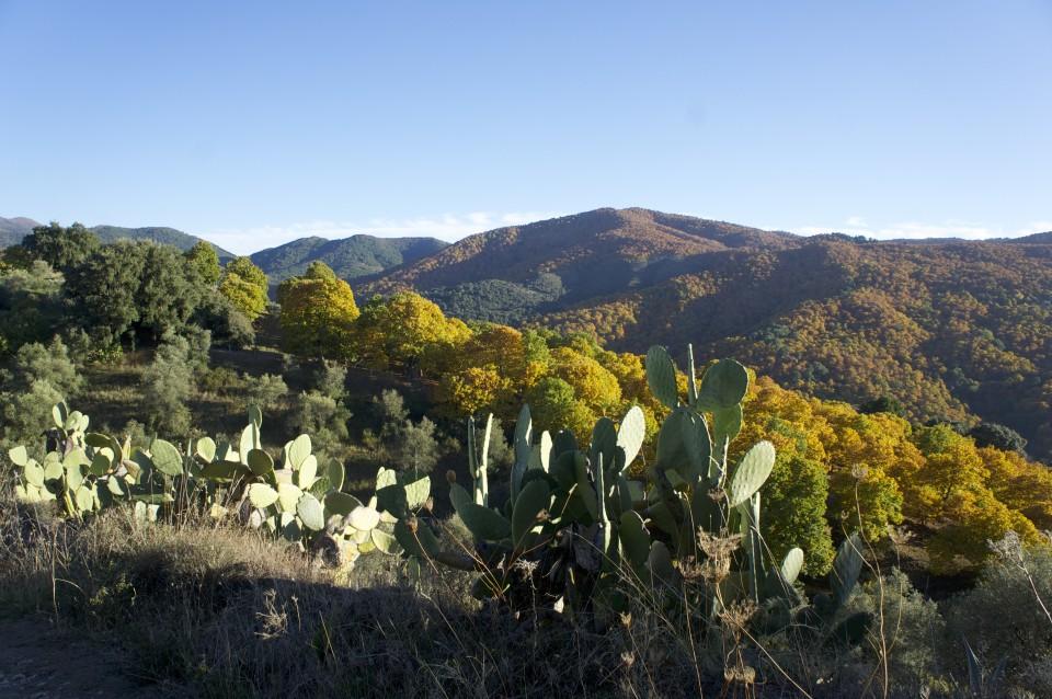 La vegetazione mista di cactus, noci e castagni