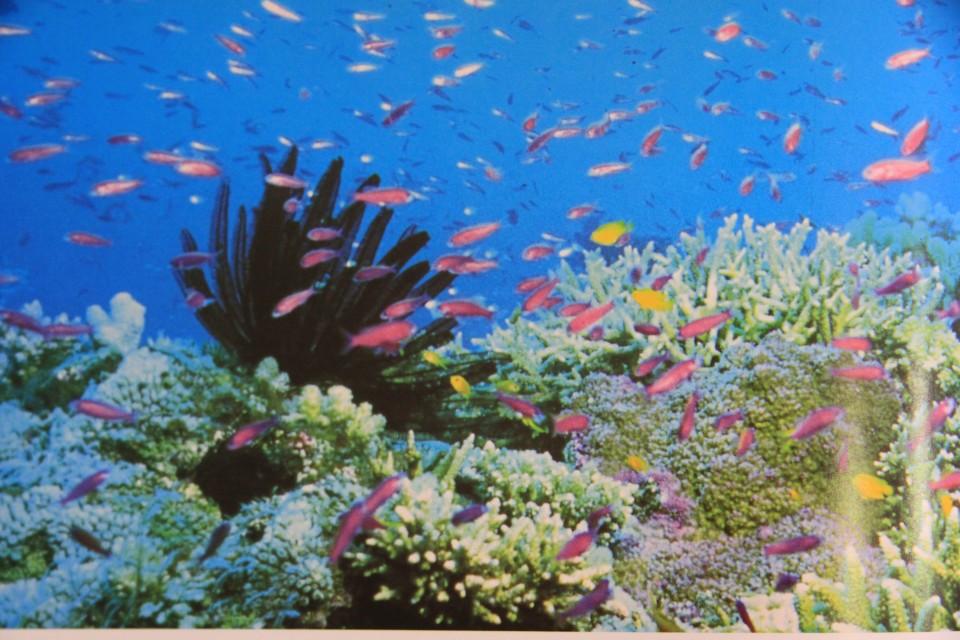 I colori dell'Agincourt Reef