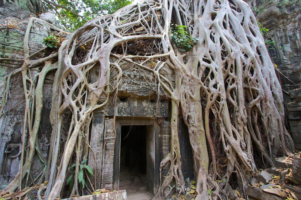 Come la natura entra nel tempio di Ta Phrom (foto di Kirsty Bennetts)