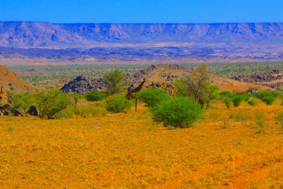 La giraffa nello spoglio suggestivo paesaggio