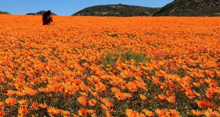Namakwa land