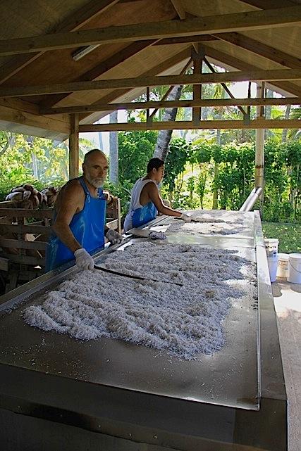Nell'azienda Rito durante la lavorazione del cocco per farne delle creme
