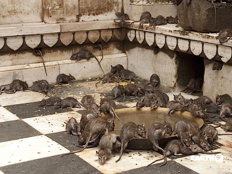 Un angolo del Tempio dei Topi
