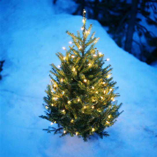 Alberi di Natale d'Autore