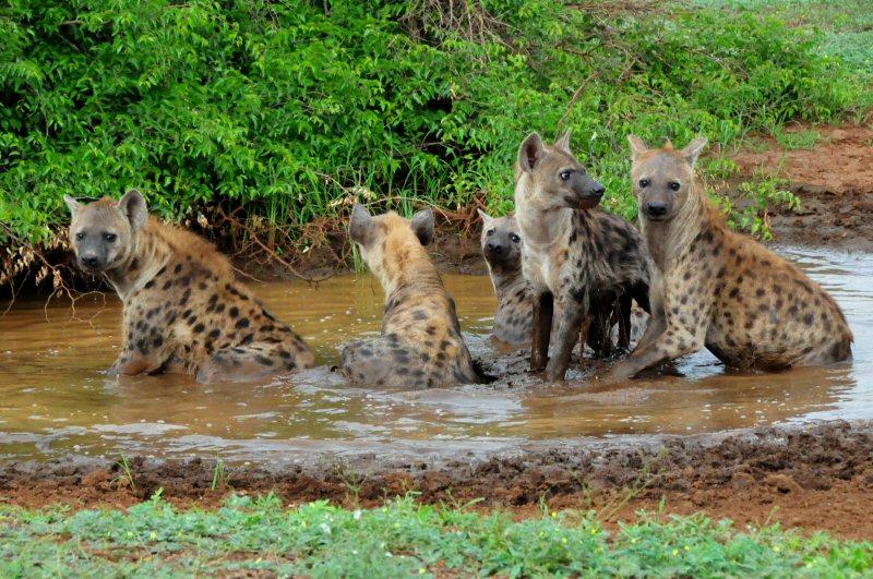 Parco Kruger in Sudafrica