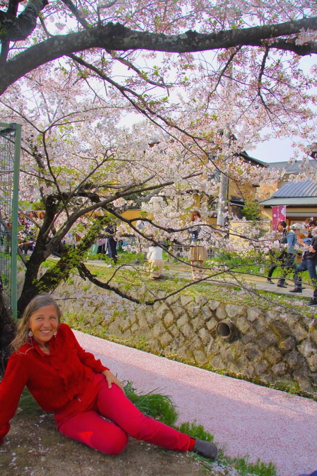 Sul ruscello di petali rosa di ciliegio nella passeggiata del Filosofo