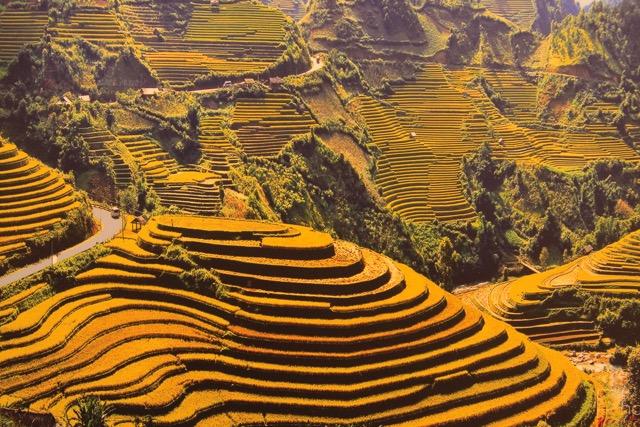 Il giallo delle risaie terrazzate patrimonio dell'Umanità attorno a Sapa