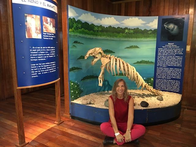 Il Manati, lo scheletro del lamantino dei Caraibi