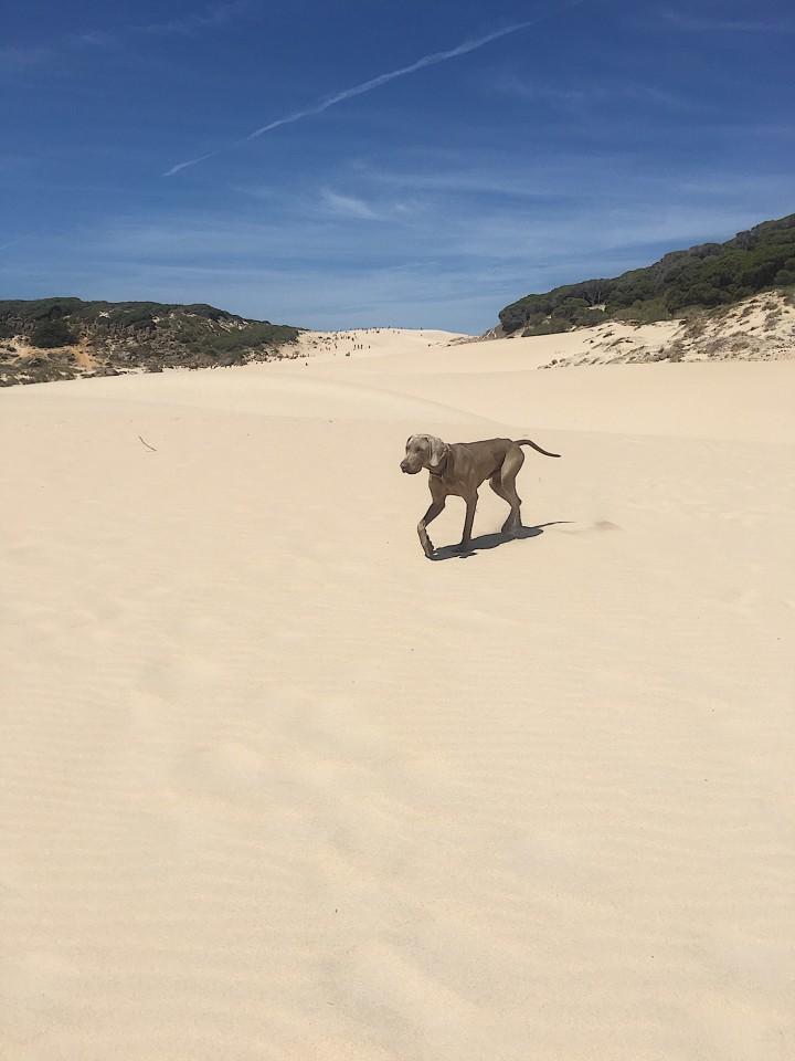 Amici della duna